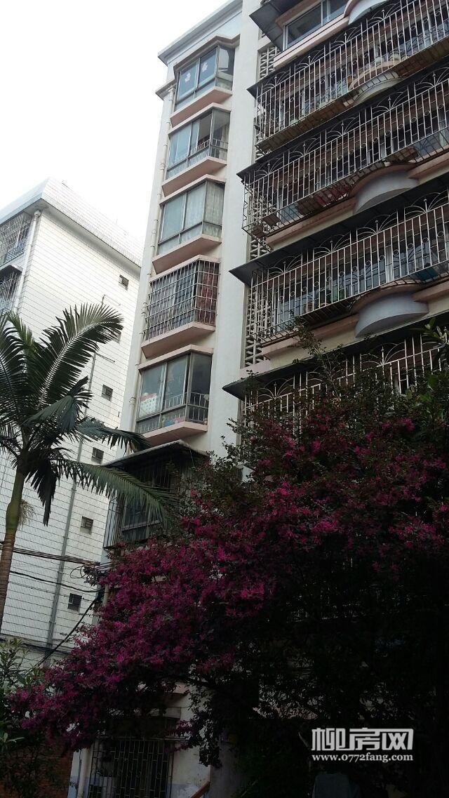 柳南旧机场片区柳南万达旁鑫泰小区 49平米简装修1室1厅1卫免中介